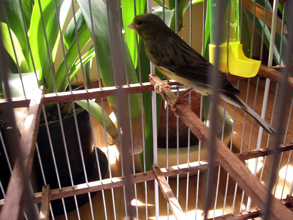 Vogelstaub ist schädlich